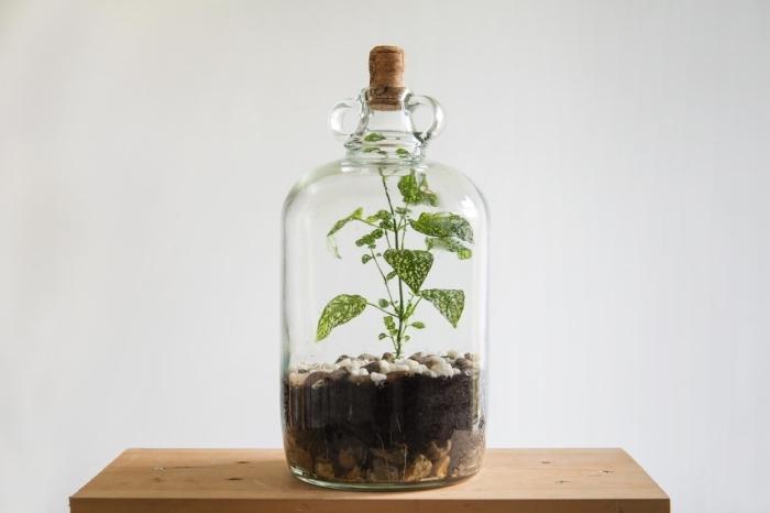 quelle plante pour terrarium fermé, modèle de jardin en miniature dans un contenant en verre rempli de terreau