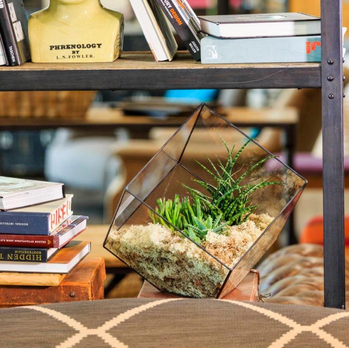 modèle de joli terrarium ouvert avec plantes succulentes ou cactus, idée déco chambre ou salon avec végétation