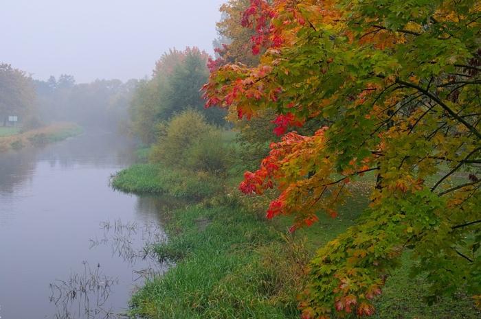 écran de verouillage rivière et forêt, arbre aux feuilles bigarrées, fond ecran automne