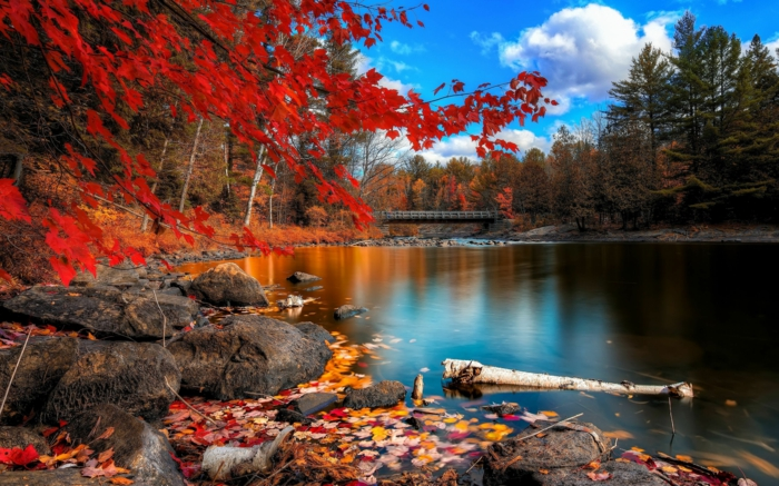 cours d'eau et pont, rivière calme au sein d'une forêt, ciel bleu, nuages, paysage d'automne impressionnant