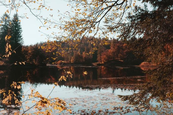 cours d'eau calme et forêt, la beauté de la nature en automne, images fond d'écran