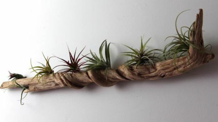 plantes grasses plantées dans un morceau de bois flotté, décoration murale bois flotté