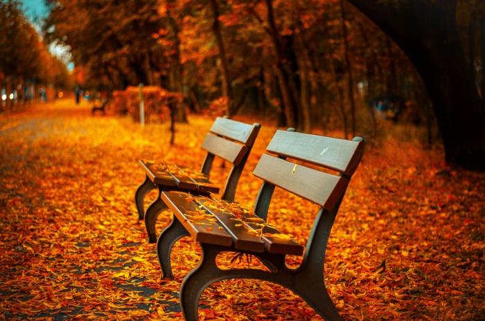 tapis de feuilles tombées, deux bancs et une alllée, parc dépaysant et fond d'écran gratuit