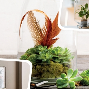 Terrarium plante en bocal: le mini jardin parfait pour votre intérieur