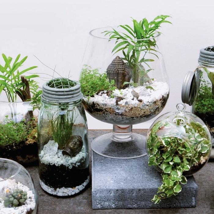 diy activité manuelle facile avec plantes vertes, idée pour faire son propre mini jardin zen avec figurines bouddha et mini plantes