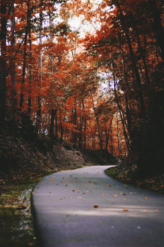 forêt en automne et le chemin, arbres situés à côté du chemin, images fond d'écran