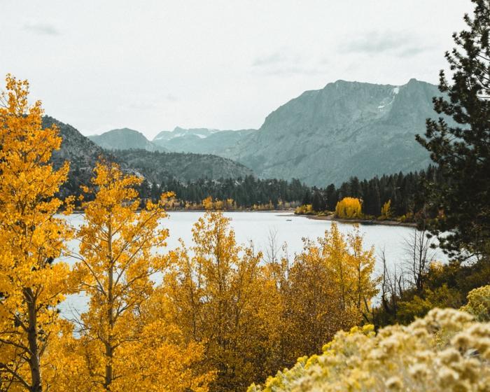 paysage montagne, collines lointaines, arbres aux feuilles jaunes, paysage d'automne