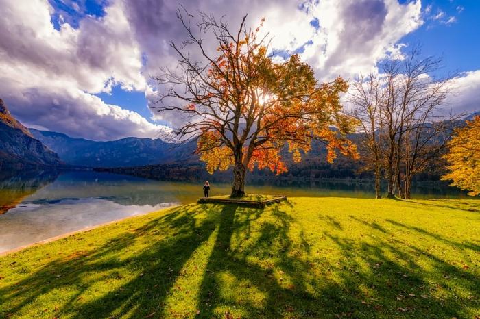 une vue stupéfiante, nuages bancs, arbre, rivière agitée, clairière à la couleur verte, fond d'écran pour ordinateur gratuit