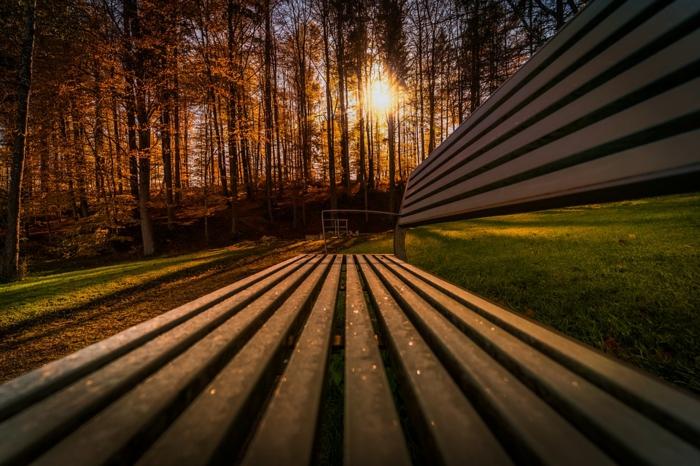 fond d'écran paysage, soleil couchant, arbres dans les rayons du soleil, bancs