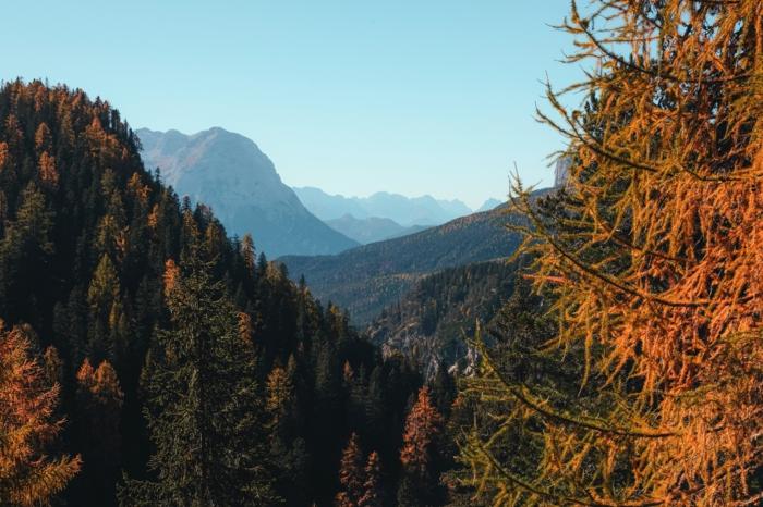 fond d'écran paysage d'automne, forêt, sapins, la sérénité de la nature