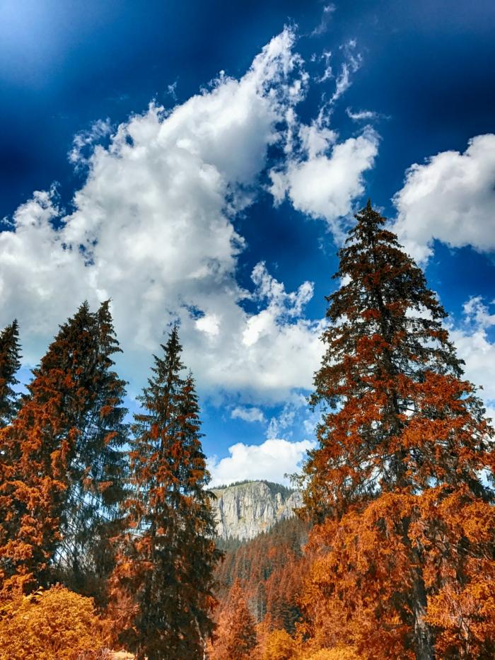 fond d'écran paysage gratuit pour ordinateur, nuages blancs, pins et arbres aux feuilles jaunes