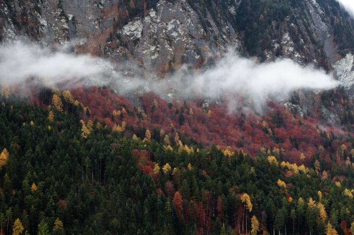 fond d'écran paysage gratuit pour ordinateur, montagne, brume, sapins, foret