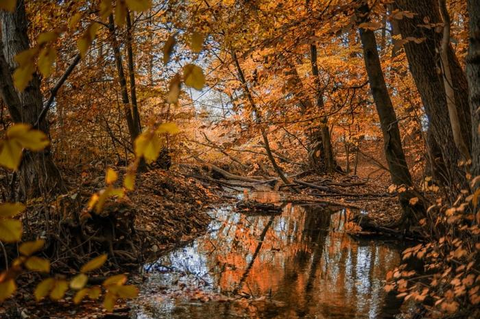 les profondeurs de la forêt, arbres qui se penchent au-dessus d'une foret, paysage d'automne