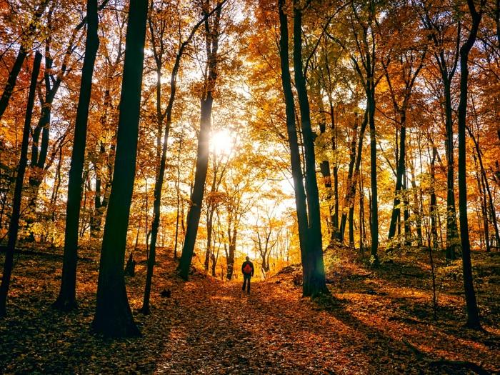 soleil dans la fôret, sentier couvert de feuilles d'automne, un homme qui contemple le paysage