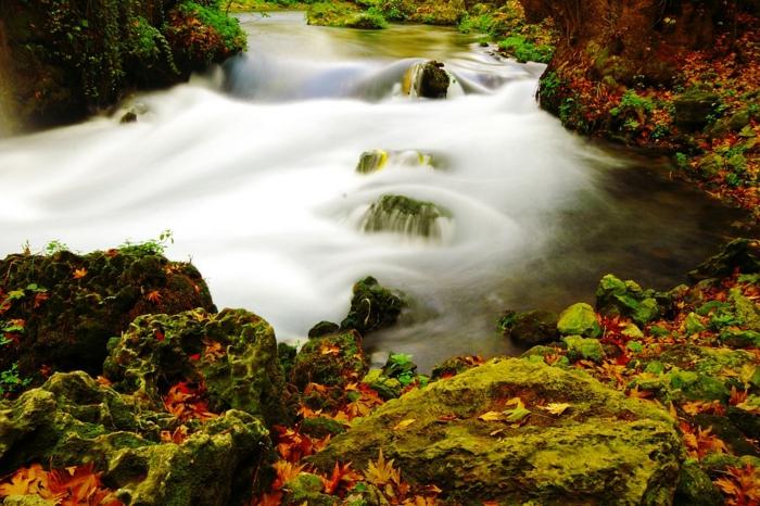 torrent qui traverse la forêt, végétation basse, mousse et feuilles tombantes, fond d'écran paysage automne, fond d'écran paysage automne