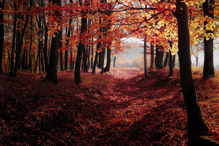 sentier romantique dans la forêt, feuilles tombées rougeoyantes, fond ecran automne