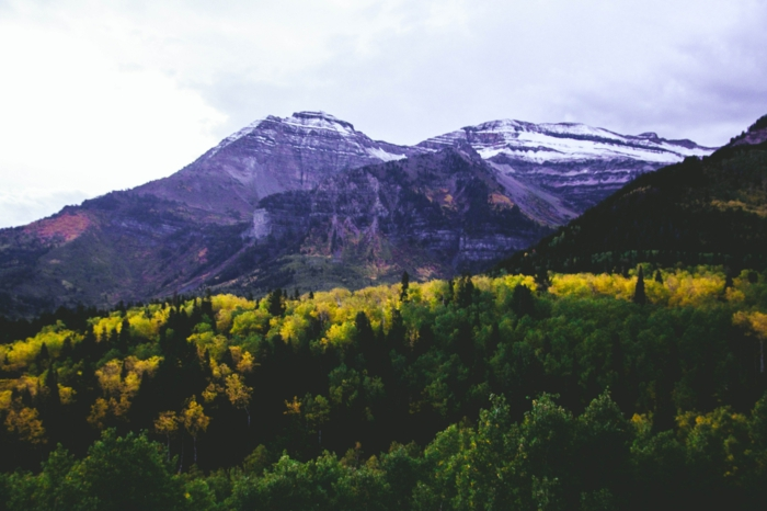 automne dans la montagne, jolie paysage arbres jaunis, montagne enneigée