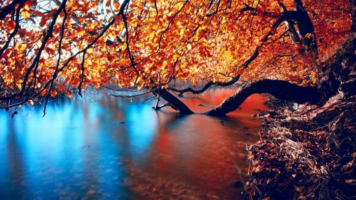 lac bleu en Australie, branches d'un arbre au feuillage jaune, fond ecran automne