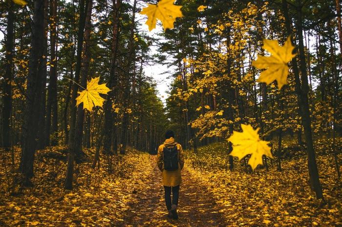 images pour fond d'écran, feuilles dorées tombantes, sentier couvert de feuilles jaunes