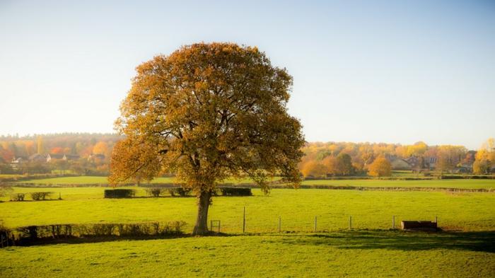 fond d'écran paysage, arbre solitaire, plaine verte, forêt d'automne, ciel sans nuages