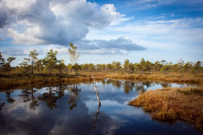 cours d'eau, ciel d'automne avec nuages blancs, arbres qui se réflètent dans l'eau, images d'automne pour fond d'écran