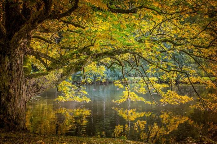 les plus jolis arbres du monde, arbre bigarré penché au-dessus de l'eau, fond d'écran automne