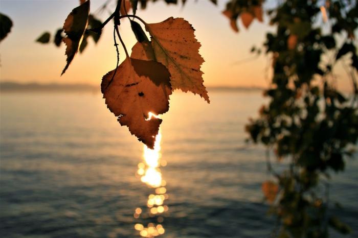 jolie paysage, fond d'écran coucher du soleil, arbre au feuillage automnal