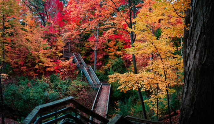grand pont passant par la forêt, feuillage en couleurs flamboyantes, fond ecran automne
