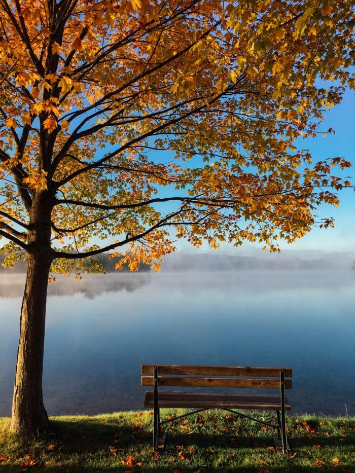 arbre aux feuilles jaunes, banc au bord du lac, écran de verrouillage splendide