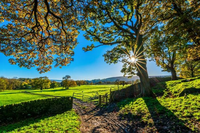 les couleurs de l'automne, grand arbre au feuillage automnale, lever du soleil, plaine verte