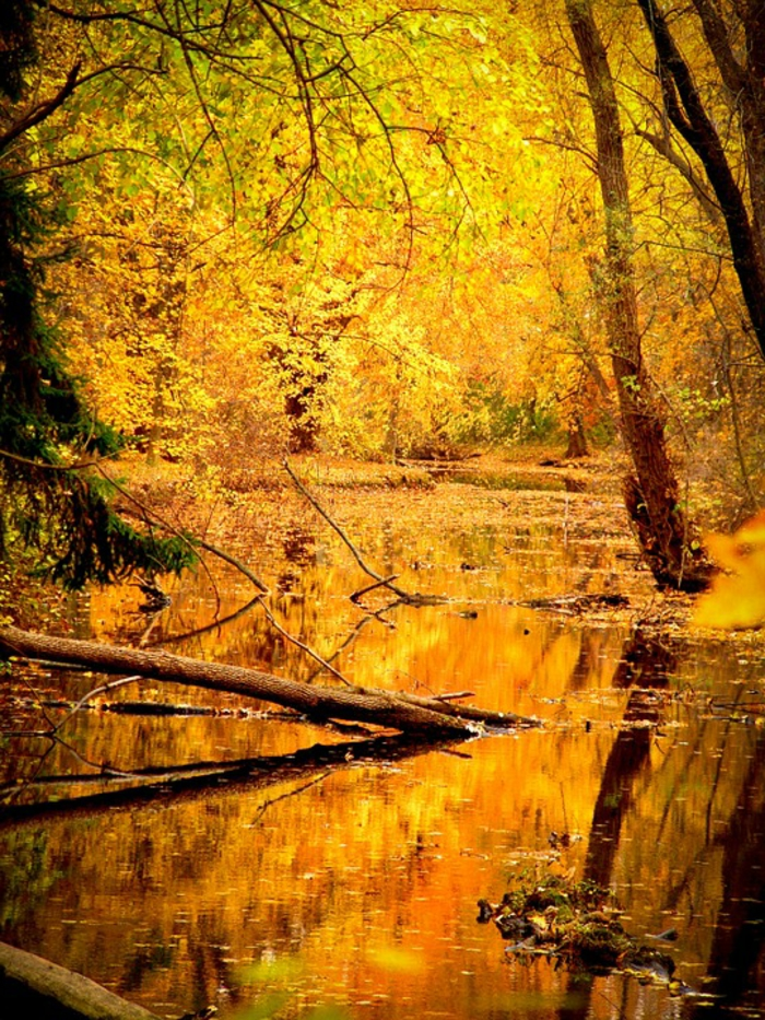 jolie paysage, la forêt enchantée, rivière qui coule qu-dessus d'une forêt magnifique teintée de jaune