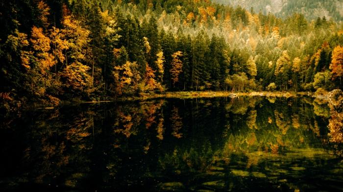 automne fond d'écran, cours d'eau dans la forêt, rivière et les réflexions des arbres