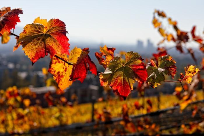 feuilles bigarrée, image d'automne pour fond d'écran, plaines à la couleur d'or