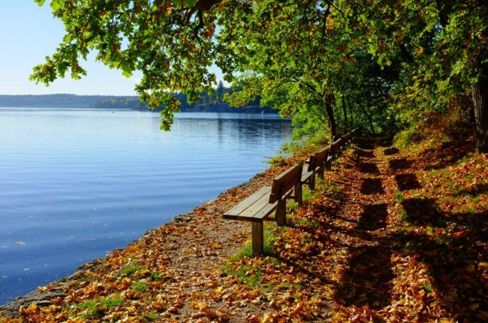automne fond d'écran, bancs près d'un grand lac, l'arrivée de l'automne