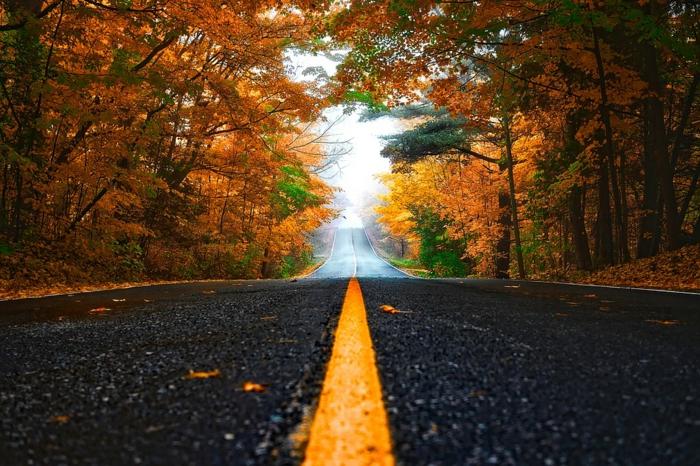 automne fond d'écran, chemin qui passe par la forêt, fond d'écran pour ordinateur gratuit
