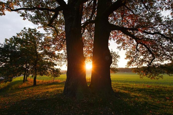 fond d'écran coucher du soleil, une plaine, un arbre à deux embranchements