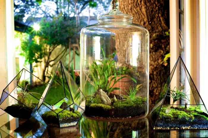 comment faire un terrarium facile dans un bocal transparent ou contenant forme géométrique, mini jardin diy