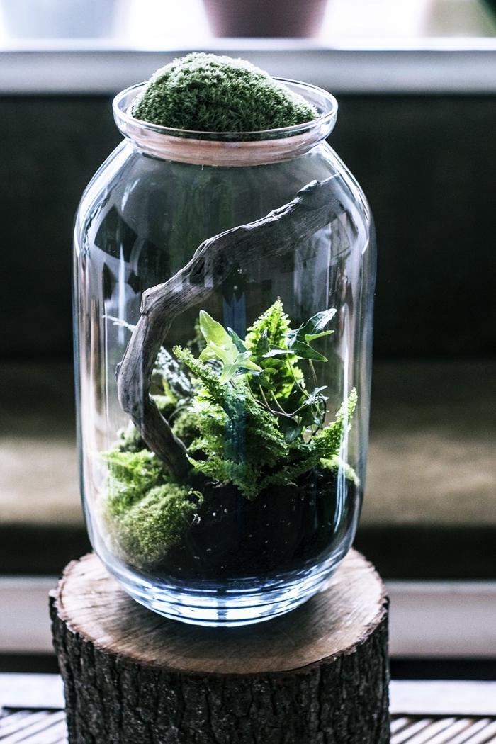 modèle de bocal en verre recyclé rempli de terreau pour plantes humides, comment faire un jardin en miniature facile