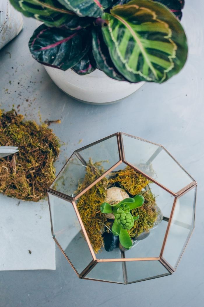 comment faire un mini jardin avec plantes vertes, idées mini plantes pour terrarium facile dans un bocal en verre