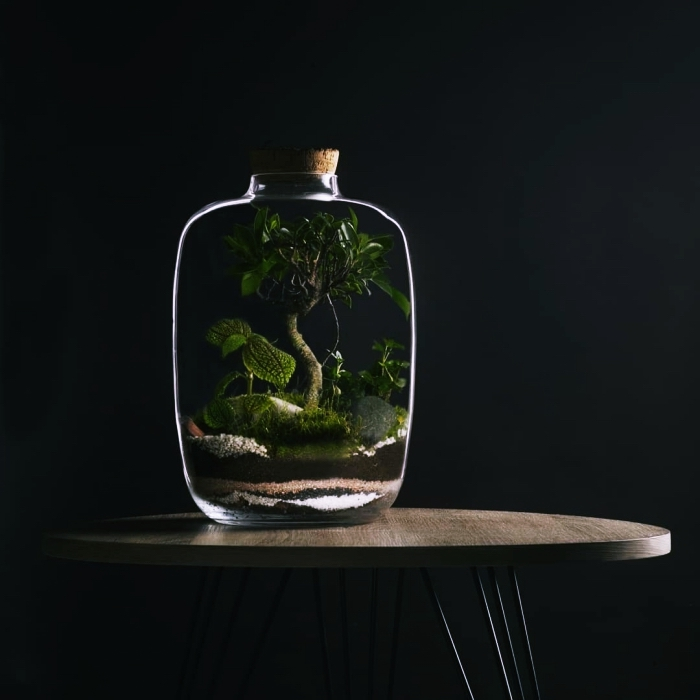 terrarium plante en bocal le mini jardin parfait pour. Black Bedroom Furniture Sets. Home Design Ideas