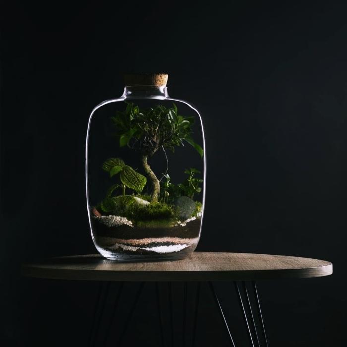 magnifique jardin miniature dans un gros bocal en verre fermé, quelle plante pour un terrarium fermé avec terreau et cailloux