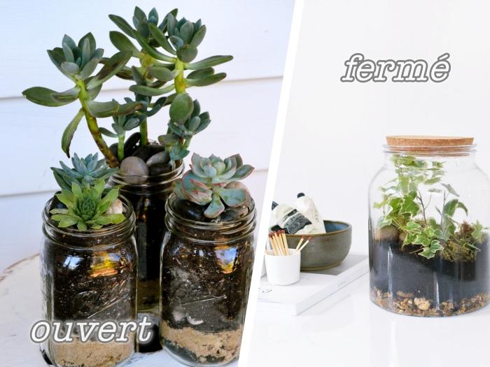exemples de types de terrarium diy en bocal, modèle de terrarium humide fermé avec plantes humides, idée terrarium ouvert avec succulentes