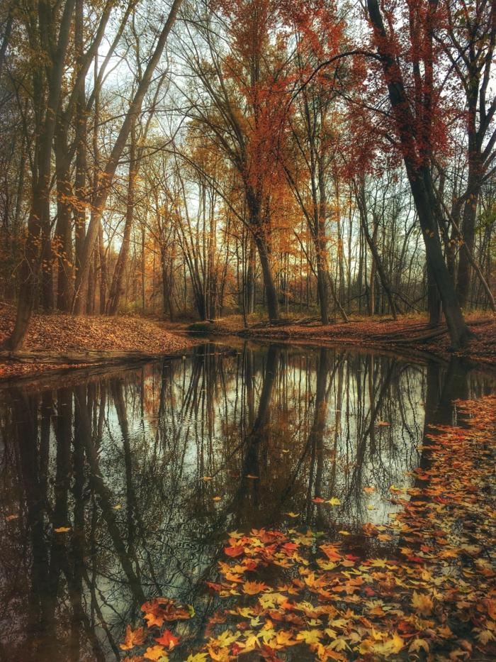 photo pour fond d'écran, rivière, feuilles flottantes, jolis arbres au feuillage flamboyant