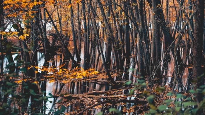 les arbres près de l'eau, feuilles jaunes tombées dans la rivière, joli fond d'écran