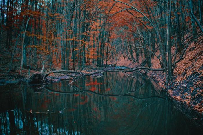 paysage d'automne aux feuilles rouges, rameaux tombés dans l'eau, réflexions des arbres dans l'eau