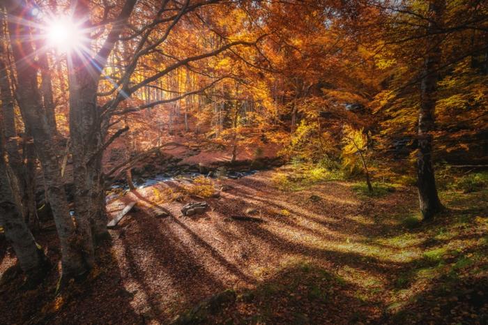 forêt aux feuilles jaunes, arbres au feuillage jaune, fond d'écran coucher du soleil
