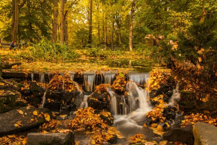 forêt aux feuilles jaunes, cascade pittoresque, forêt aux couleurs d'automne