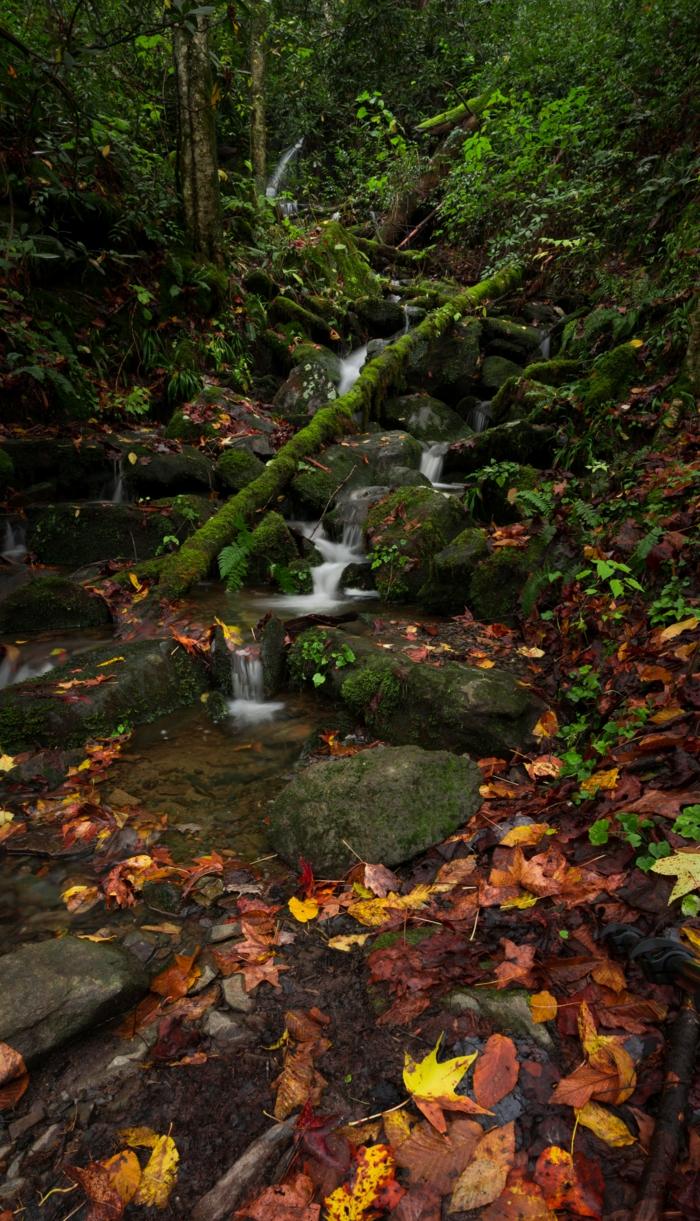 ruisseau dans la forêt, forêt verte, roques dans l'eau, photo pour fond d'écran