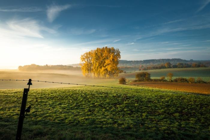 joli paysage pour fond d'écran, gazon vert, arbre solitaire, vue paradisiaque