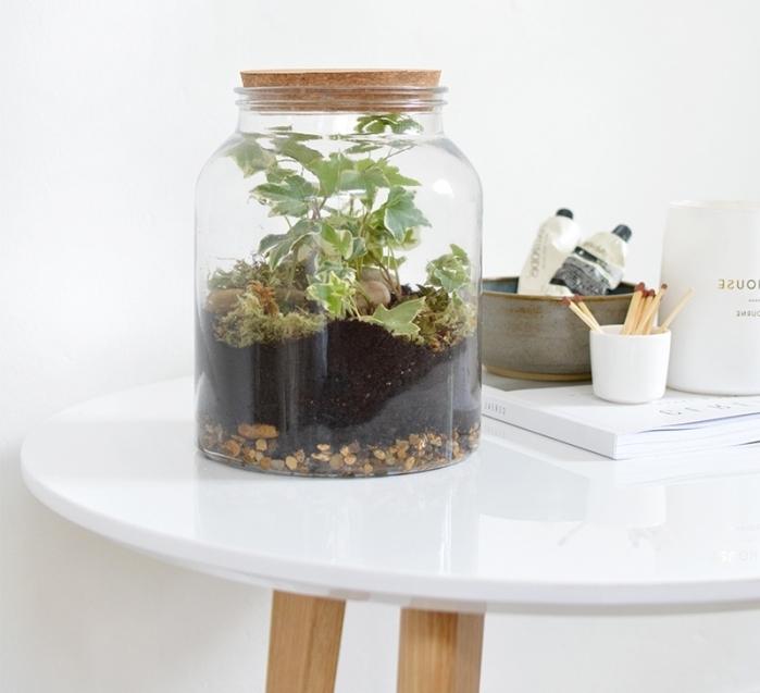 idée plante sous cloche ou couvercle dans un gros bocal en verre rempli de terreau pour plantes humides et galets